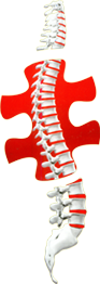 Neha Surgical - Authorised Dealer of Spinal Implants, Instruments and Hospital Equipments